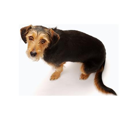 Urine Damage Treatment Lakeland Fl Pet Urine Cleaning